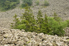 Sea of basalt. A huge slope with mossy basalt blocks in the german rhoen national park stock photo