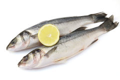 Sea bass. Two sea bass with lemon isolated on white background royalty free stock photo