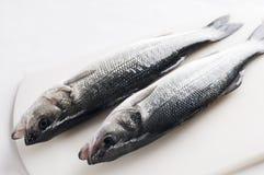 Sea bass Stock Image