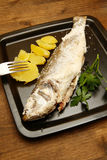 Sea bass Stock Images