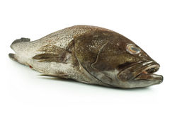 Sea bass. Fish sea bass on white background Royalty Free Stock Photo