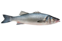 Sea-bass Royalty Free Stock Photos