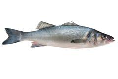 Sea-bass royalty free stock photos