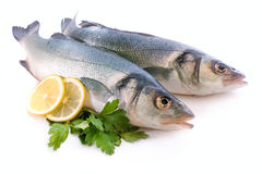 Sea-bass Royalty Free Stock Images