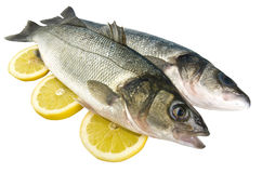 Sea bass Stock Image