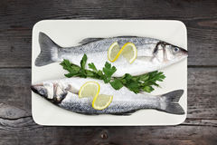 Sea bass. Royalty Free Stock Photo