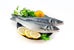 Sea bass. With lemon and parsley on the plate isolated Royalty Free Stock Images