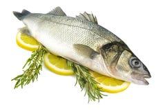Sea bass Royalty Free Stock Photos