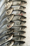 Sea bass. In some fish market, travel Europe royalty free stock images