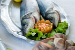 Sea bass. Plate of two sea bass on plate Royalty Free Stock Photos