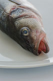 Sea_bass_01 Image stock