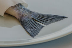 Sea_bass_02 Arkivbilder