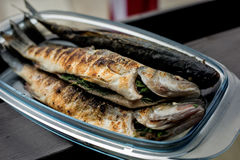 Sea bass barbeque. Grilled sea bass in the glassware Royalty Free Stock Photo