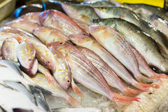 Sea bass and bream fresh fish. At the market stock photo