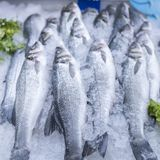 Sea bass and sea breams on ice on supermarket seafood display stock images
