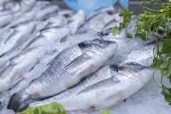Sea bass and sea breams on ice on supermarket seafood display royalty free stock image