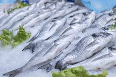 Sea bass and sea breams on ice on supermarket seafood display stock photos