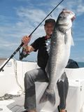 Sea bass. Catch of fish. Lucky  fisherman holding a large sea bass Stock Photography