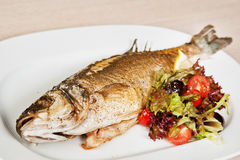 Sea bass Royalty Free Stock Photos