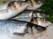 Sea Bass. A Display of Sea Bass on a Fishmongers Counter royalty free stock photography