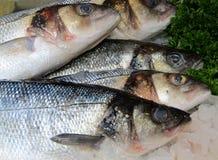 Sea Bass. Royalty Free Stock Photography