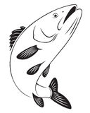Sea bass. The figure shows sea bass Royalty Free Stock Photo