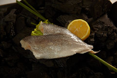 Sea bass fillet Royalty Free Stock Images
