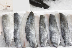 Sea bass fillets. Fresh sea bass fillets on ice Stock Photography