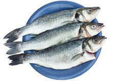 Sea bass fish. On blue plate isolated on white background royalty free stock photo