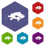 Sea bass fish icons set hexagon. Isolated vector illustration Royalty Free Stock Photography