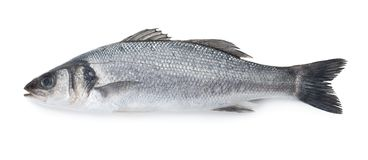 Sea bass fish. Isolated on white background royalty free stock photography