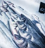 Seabass in fishmarket Stock Photography