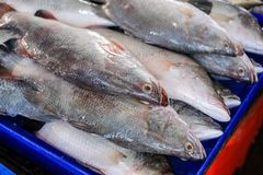 Sea Bass fish. Sea Bass in the shelves sold at the market stock photos