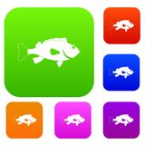 Sea bass fish set color collection. Sea bass fish set icon color in flat style isolated on white. Collection sings vector illustration Royalty Free Stock Photo