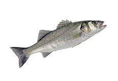 Sea Bass Fish Stock Photos