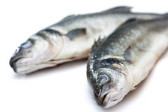 Sea bass fish Royalty Free Stock Photos