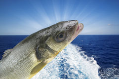 Sea bass fishing Stock Photo