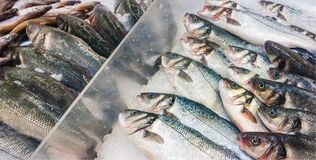 Sea-bass fishmarket royalty free stock photography