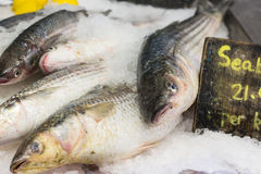 Sea Bass. Fresh Sea Bass on a bed of ice royalty free stock photos
