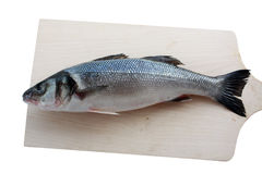 Sea bass. Fresh fish on the table Stock Image