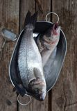 Sea bass Royalty Free Stock Image