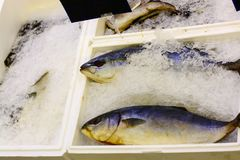 Sea bass frozen in the ice on the supermarket shelf. Sea bass frozen in the ice on the supermarket shelf Stock Images