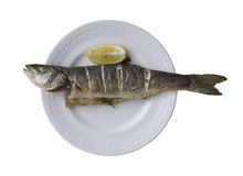 Sea bass grill Stock Images