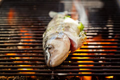 Sea Bass On The Grill. Close up photograph of a sea bass on the grill stock photo
