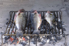 Sea bass grilled the traditional Dalmatian way on steel grill ba Stock Photo