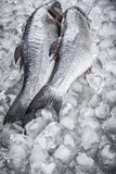 Sea bass on ice Stock Photos