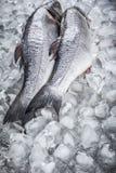 Sea bass on ice Stock Photos