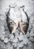Sea bass on ice. Whole Sea bass on ice Royalty Free Stock Images