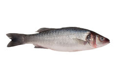 Sea bass - isolated. Fresh sea bass on white backgound Stock Images
