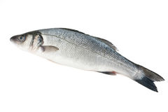 Sea bass isolated Stock Photo